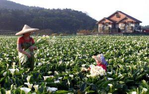 Taiwan fields
