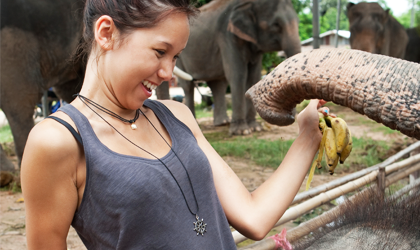 View the i-to-i Ultimate Thailand Adventure TEFL Trip