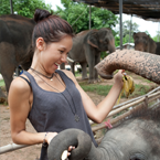 Elephants in Surin