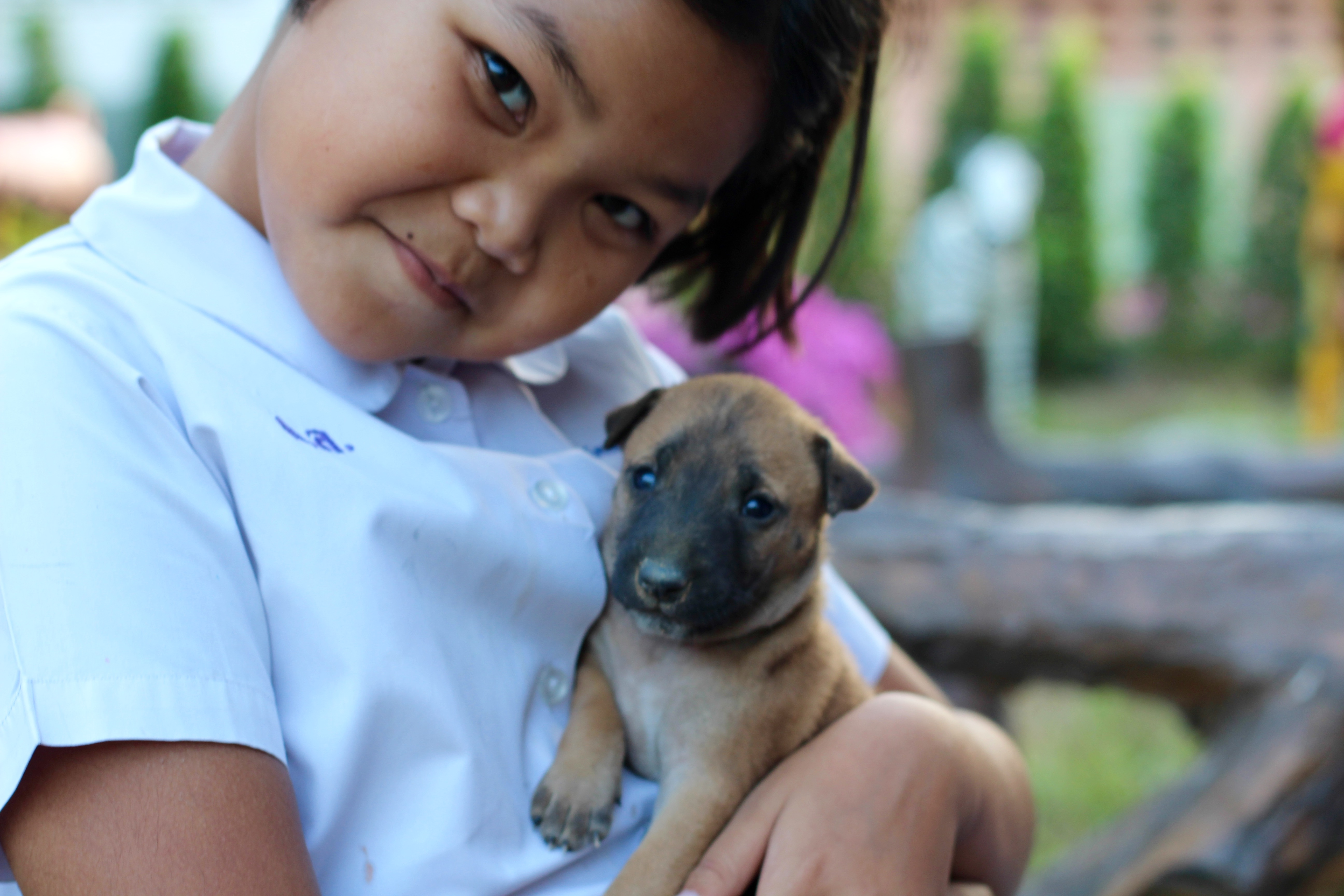 i-to-i student at school holding a puppy found on the school grounds in Thailand