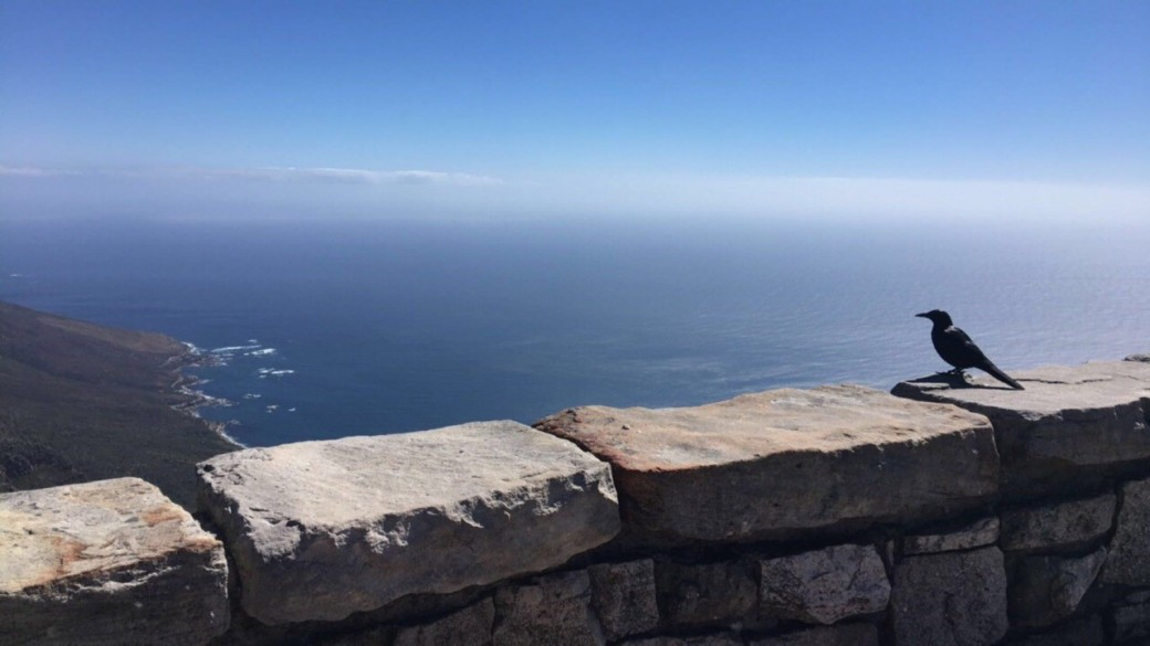View from the ascent to the top of Table Mountain, South Africa.