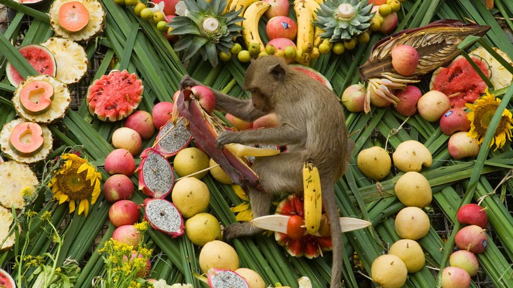 Monkey Banquet