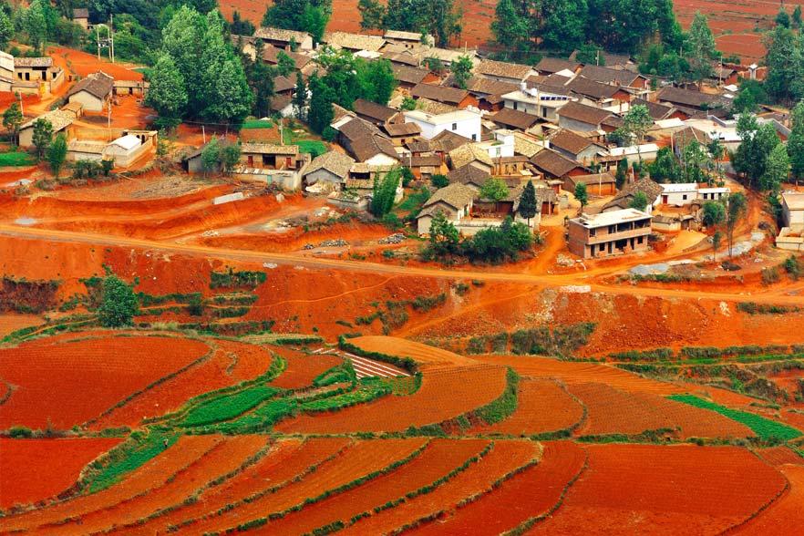 Red Fields