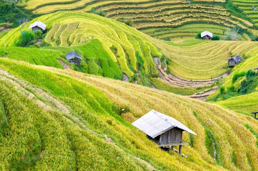 Vietnamese fields