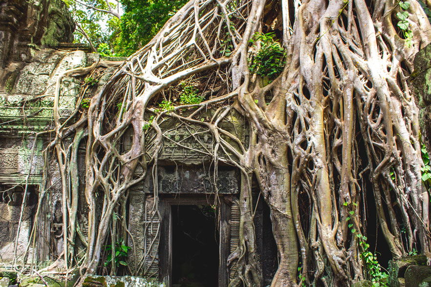 Temple and roots