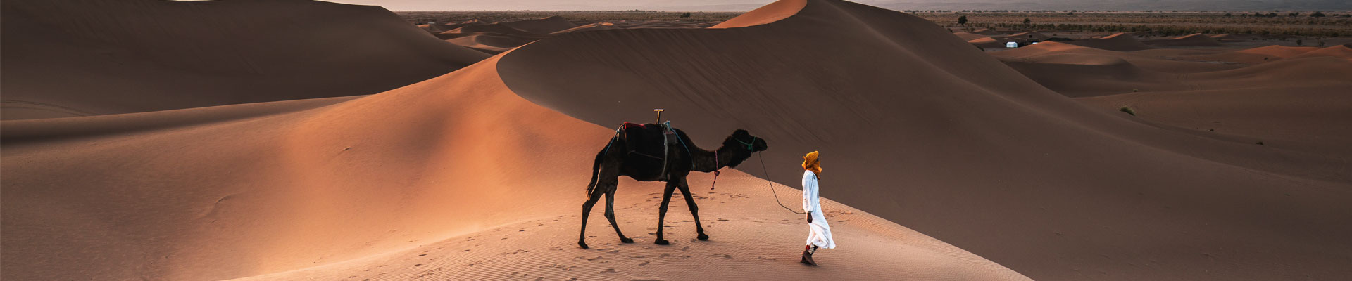 A person walking a camel in the desert