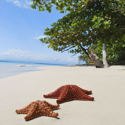 Starfish on a beach in Costa Rica