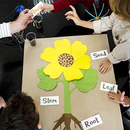 Sunflower game in TEFL classroom