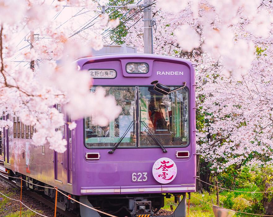 Japanese train in cherry blossom season