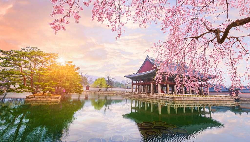 South Korea TEFL Internship